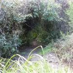 Seitenwege im Park