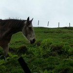 Wunder! Ein Pferd!