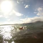 Schwimmversuche trotz Wellen